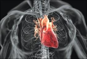 jantung kering